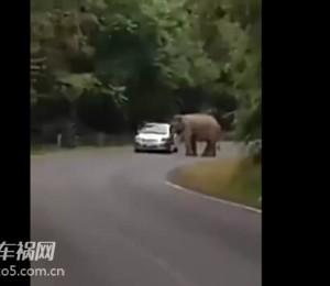 车主遭遇奇葩车祸 狭路相逢大象胜